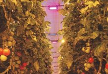 Osram horticultural investments
